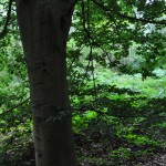 A new discovery:  Creech Wood, Denmead