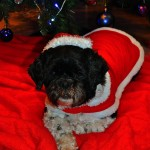 Santa Paws & Magellan Wish you a Merry Christmas and Happy, Healthy and Prosperous 2013!