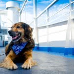 AFerry partners with the RSPCA