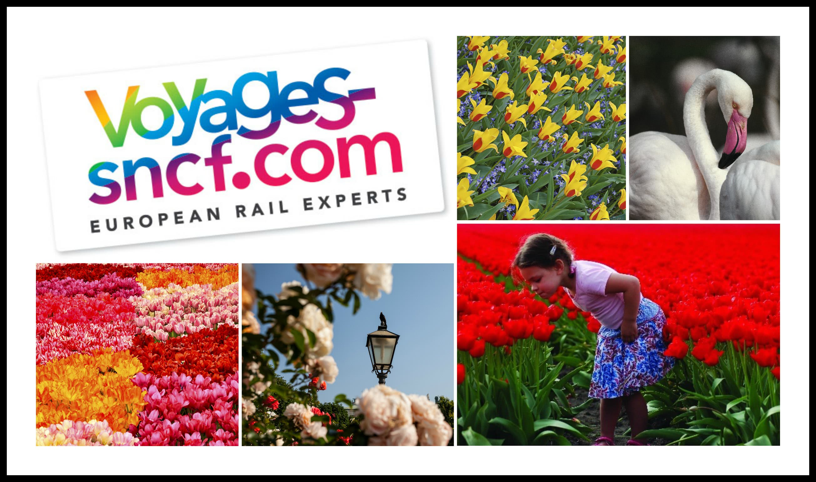 Voyages-sncf Flower Power