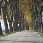 Magellan Bites: Avenues of Trees in Southern France
